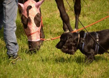 L'approccio cognitivo-relazionale con cani e cavalli