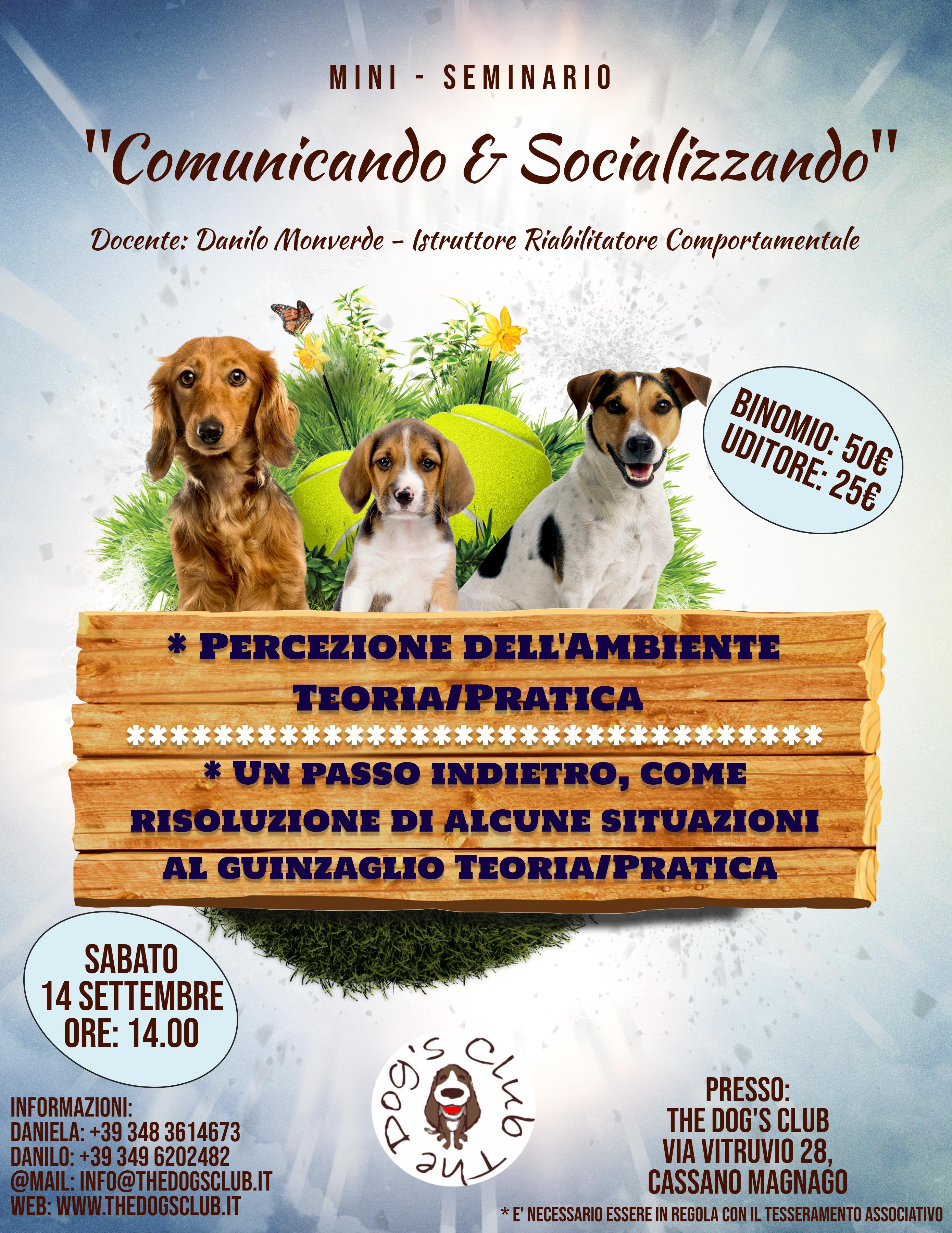 Copy of Neighbourhood Dog Walker Advert Flyer (3)
